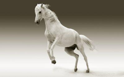 Mein Pferd bockt! Warum nur?