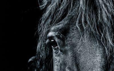 Pferde loben…, warum ist das so wichtig?!